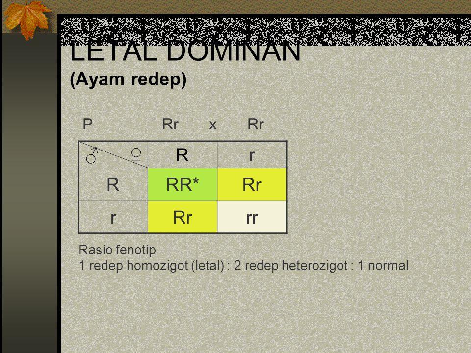 LETAL DOMINAN (Ayam redep) ♂ ♀Rr RRR*Rr r rr Rasio fenotip 1 redep homozigot (letal) : 2 redep heterozigot : 1 normal P Rr x Rr