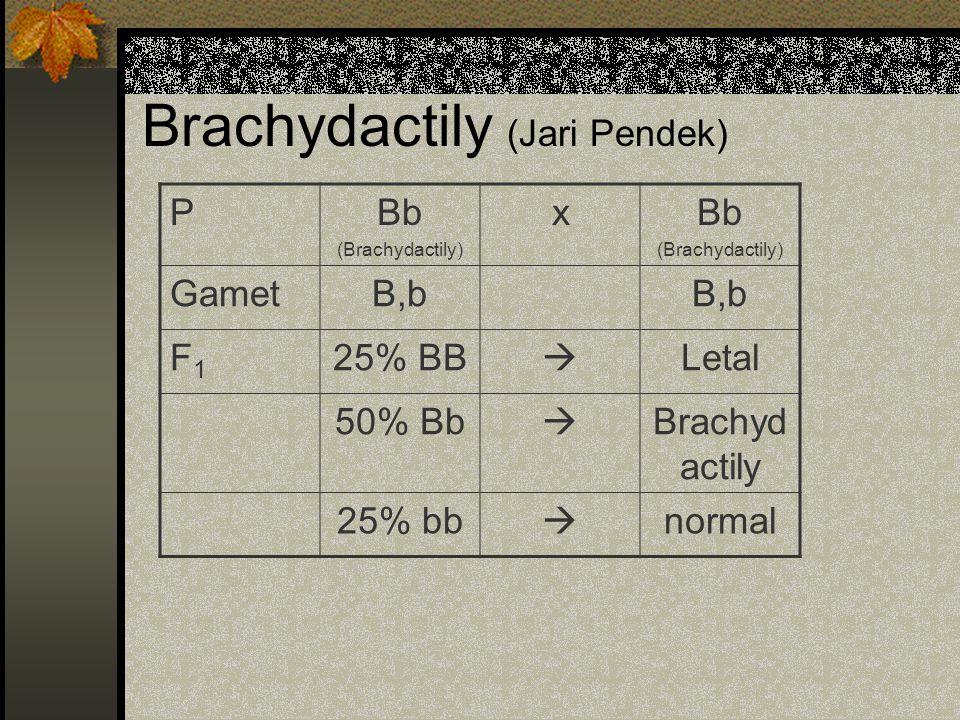 Brachydactily (Jari Pendek) PBb (Brachydactily) xBb (Brachydactily) GametB,b F1F1 25% BB  Letal 50% Bb  Brachyd actily 25% bb  normal