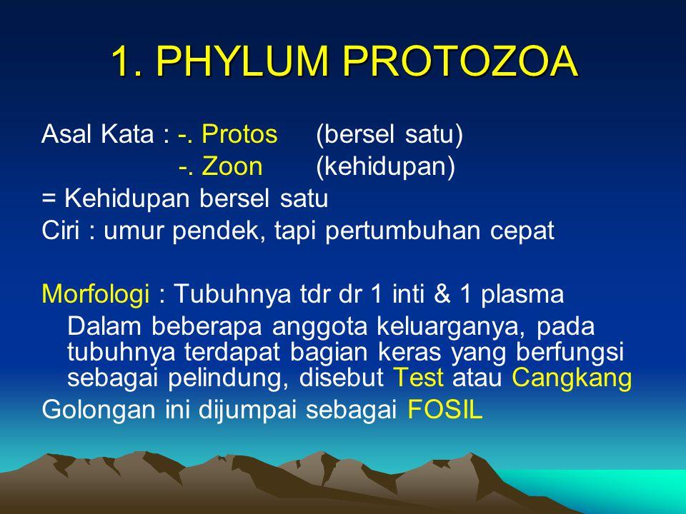 Ciri-ciri / Sifat khas Phylum Protozoa 1.Monoseluler 2.Belum memiliki bagian sistem organik 3.Dapat hidup di segala habitat 4.Jumlah individu jauh lebih banyak dari phylum lainnya 5.Ukuran tubuh dari 1- 2 mm atau lebih kecil, tetapi ada juga yang berukuran + 75 mm 6.Memiliki pergantian generasi di dalam perkembangannya 7.Golongan tumbuhan & binatang 8.Hidup secara soliter dan beberapa secara koloni