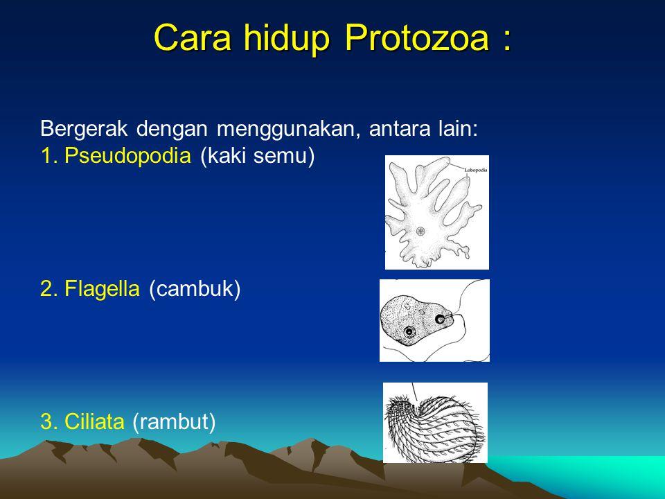 Cara hidup Protozoa : Bergerak dengan menggunakan, antara lain: 1. Pseudopodia (kaki semu) 2. Flagella (cambuk) 3. Ciliata (rambut)