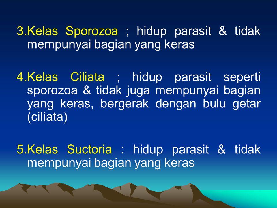 3.Kelas Sporozoa ; hidup parasit & tidak mempunyai bagian yang keras 4.Kelas Ciliata ; hidup parasit seperti sporozoa & tidak juga mempunyai bagian ya