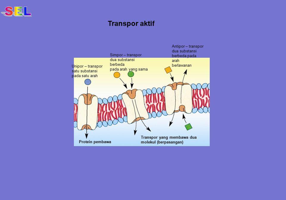 Transpor aktif Unipor – transpor satu substansi pada satu arah Simpor – transpor dua substansi berbeda pada arah yang sama Antipor – transpor dua subs