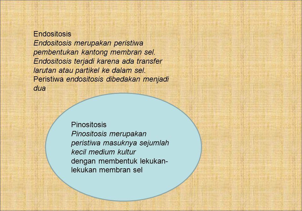 Endositosis Endositosis merupakan peristiwa pembentukan kantong membran sel. Endositosis terjadi karena ada transfer larutan atau partikel ke dalam se