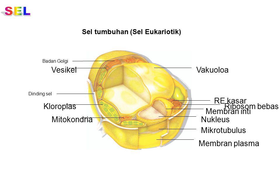 Badan Golgi Lisosom Vesikel Mikrofilamen Mikrotubulus Mitokondria Sepasang sentriol Membran plasma Nukleus RE kasar Ribosom bebas RE halus Sel hewan (Sel Eukariotik)