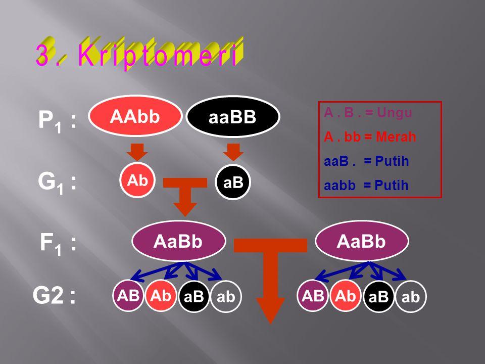 P 1 : G 1 : F 1 : Ab ABAb G2 : A. B. = Ungu A. bb = Merah aaB. = Putih aabb = Putih AaBb AAbb aaBB aB ab ABAb aBab