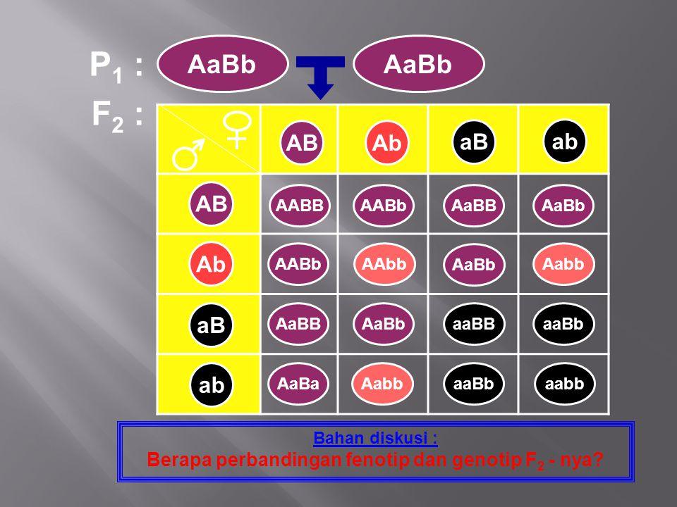 F 2 : Bahan diskusi : Berapa perbandingan fenotip dan genotip F 2 - nya? P 1 : AaBb AB Ab aB ab ABAb aB ab AABBAABbAaBBAaBb AABbAAbb AaBb Aabb AaBBAaB