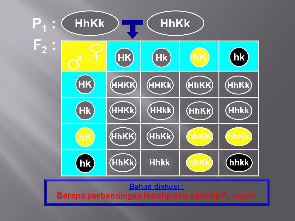 F 2 : Bahan diskusi : Berapa perbandingan fenotip dan genotip F 2 - nya? P 1 : HhKk HK Hk hK hk HKHk hK hk HHKKHHKkHhKKHhKk HHKkHHkk HhKk Hhkk HhKKHhK