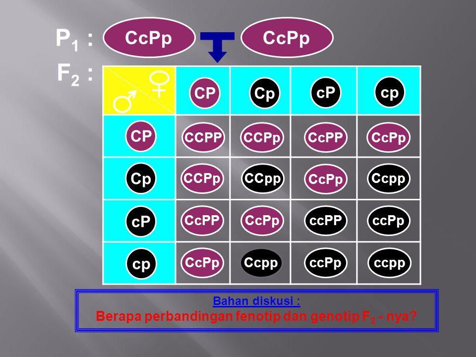 F 2 : Bahan diskusi : Berapa perbandingan fenotip dan genotip F 2 - nya? P 1 : CcPp CP Cp cP cp CPCp cP cp CCPPCCPpCcPPCcPp CCPpCCpp CcPp Ccpp CcPPCcP
