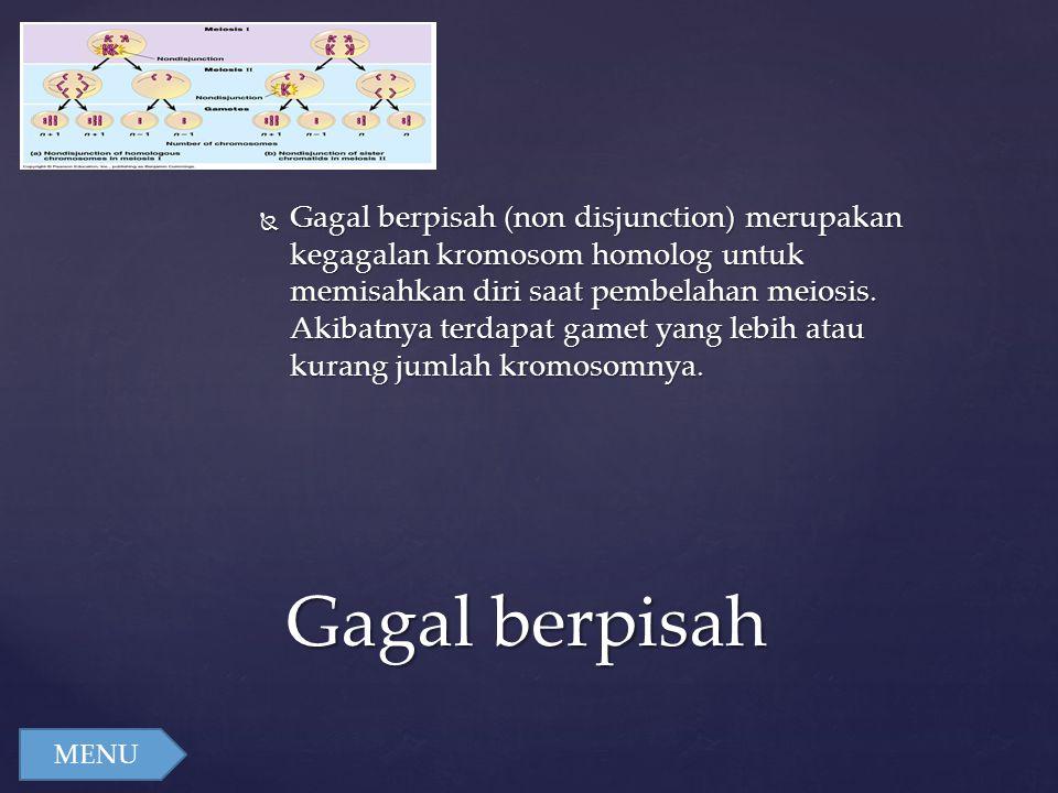  Gagal berpisah (non disjunction) merupakan kegagalan kromosom homolog untuk memisahkan diri saat pembelahan meiosis. Akibatnya terdapat gamet yang l