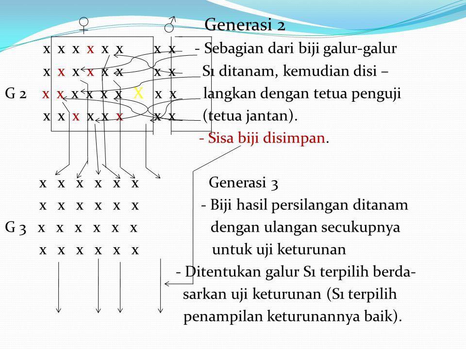 ♀ ♂ Generasi 2 x x x x x x x x - Sebagian dari biji galur-galur x x x x x x x x S1 ditanam, kemudian disi – G 2 x x x x x x X x x langkan dengan tetua penguji x x x x x x x x (tetua jantan).