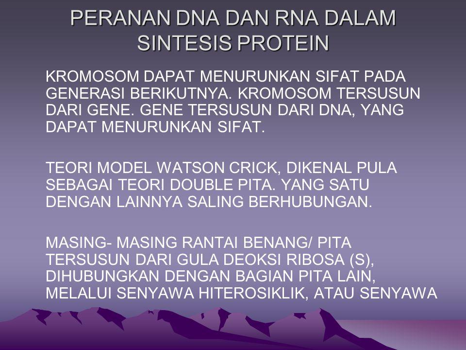 PERANAN DNA DAN RNA DALAM SINTESIS PROTEIN KROMOSOM DAPAT MENURUNKAN SIFAT PADA GENERASI BERIKUTNYA.
