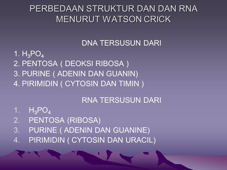 PERBEDAAN STRUKTUR DAN DAN RNA MENURUT WATSON CRICK DNA TERSUSUN DARI 1.