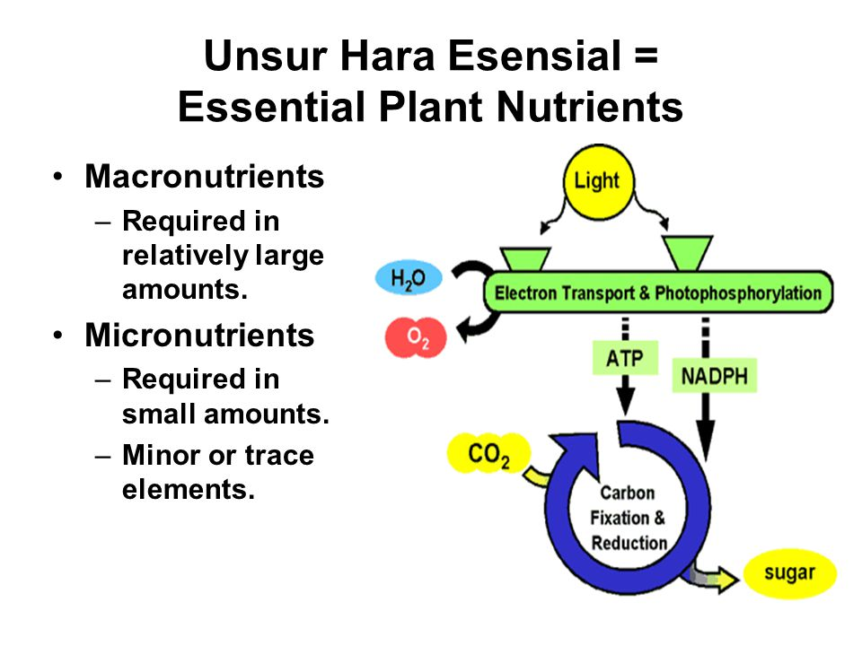 Unsur Hara Esensial = Essential Plant Nutrients Macronutrients –Required in relatively large amounts.