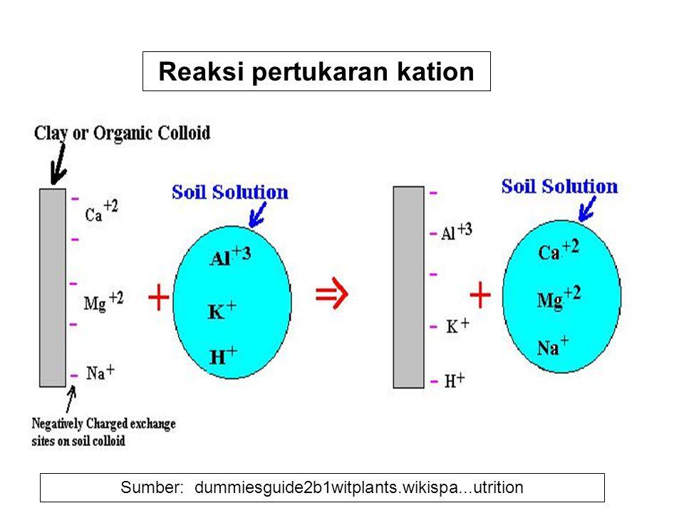 Sumber: dummiesguide2b1witplants.wikispa...utrition Reaksi pertukaran kation
