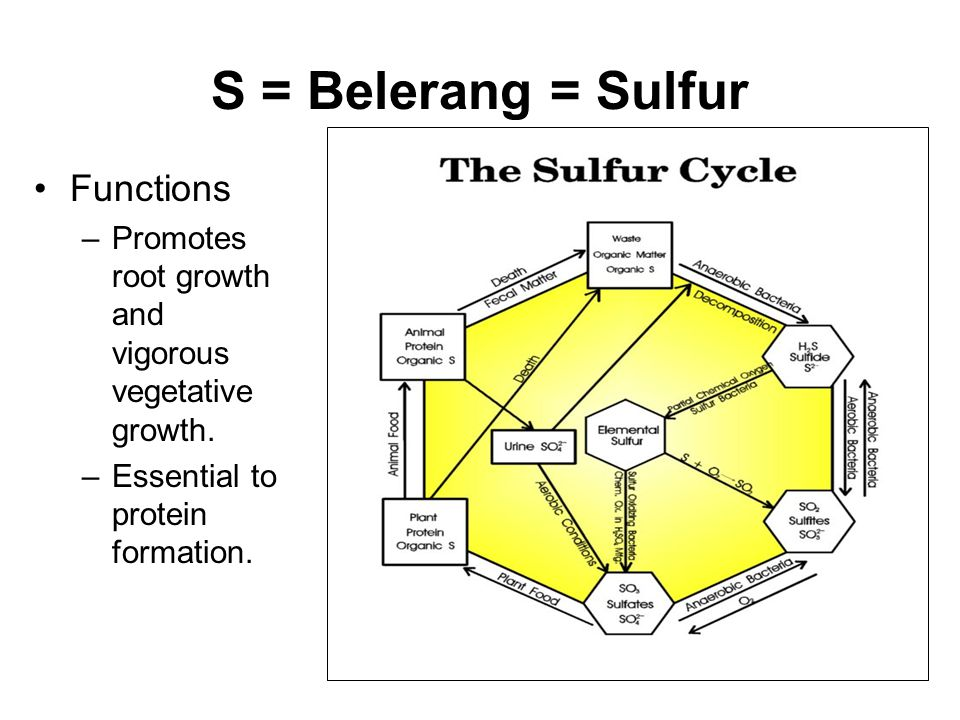 S = Belerang = Sulfur Functions –Promotes root growth and vigorous vegetative growth.