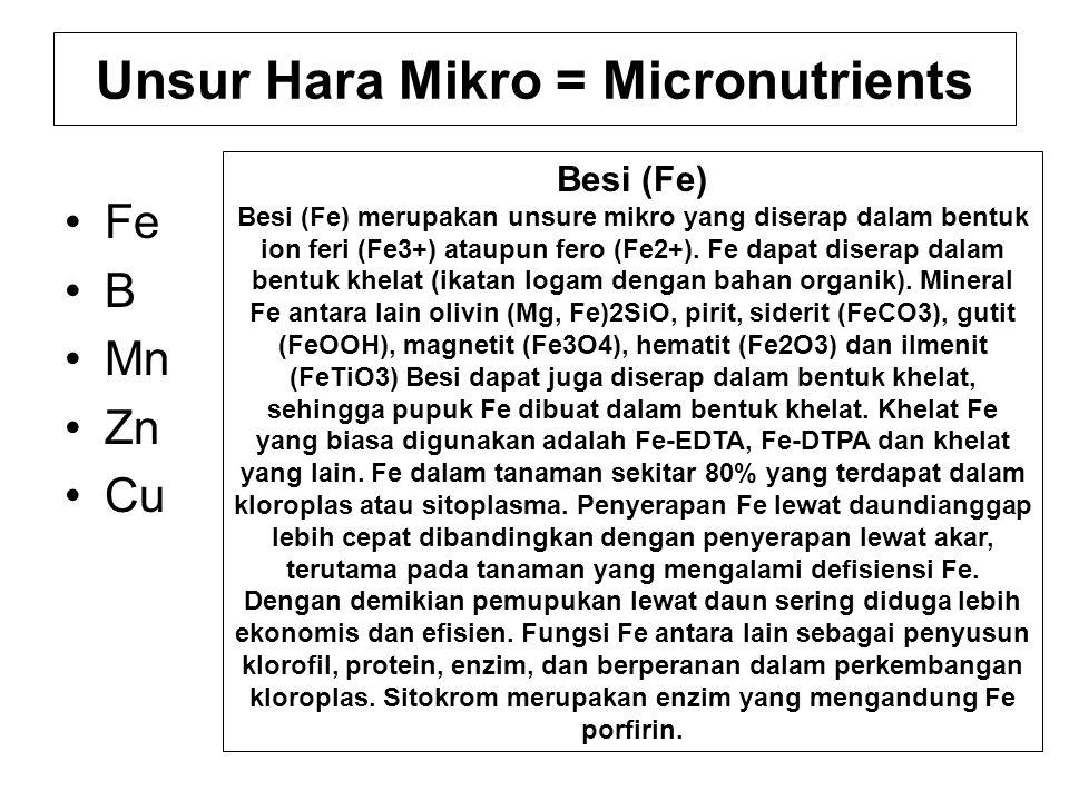 Unsur Hara Mikro = Micronutrients Fe B Mn Zn Cu Besi (Fe) Besi (Fe) merupakan unsure mikro yang diserap dalam bentuk ion feri (Fe3+) ataupun fero (Fe2