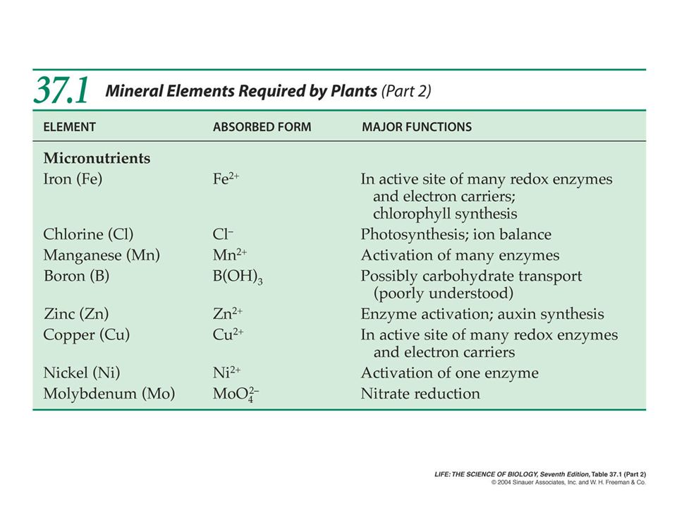 Nitrogen Function –Promotes growth of leaves and stems.