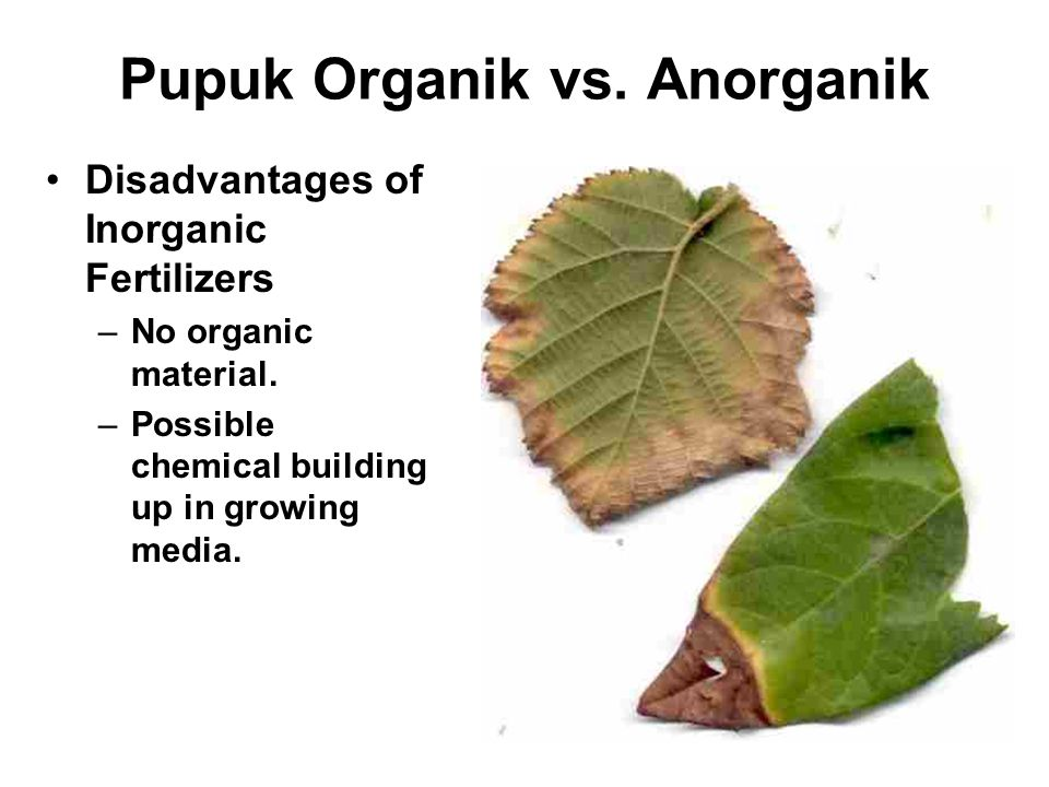Pupuk Organik vs.Anorganik Disadvantages of Inorganic Fertilizers –No organic material.