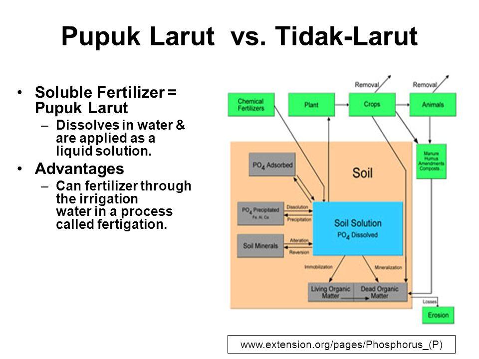 Pupuk Larut vs. Tidak-Larut Soluble Fertilizer = Pupuk Larut –Dissolves in water & are applied as a liquid solution. Advantages –Can fertilizer throug