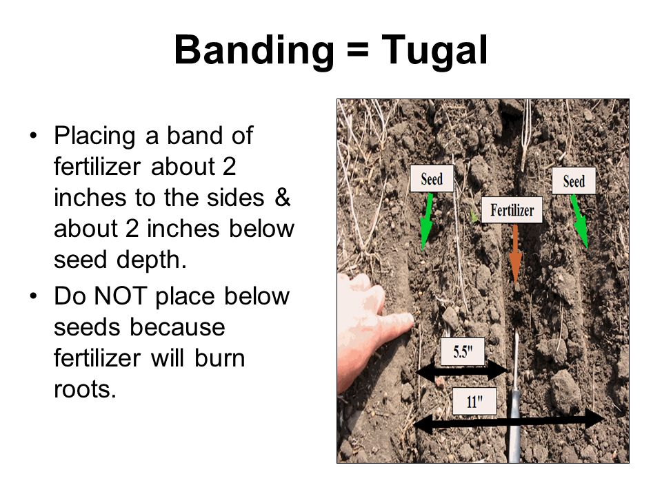 Banding = Tugal Placing a band of fertilizer about 2 inches to the sides & about 2 inches below seed depth.