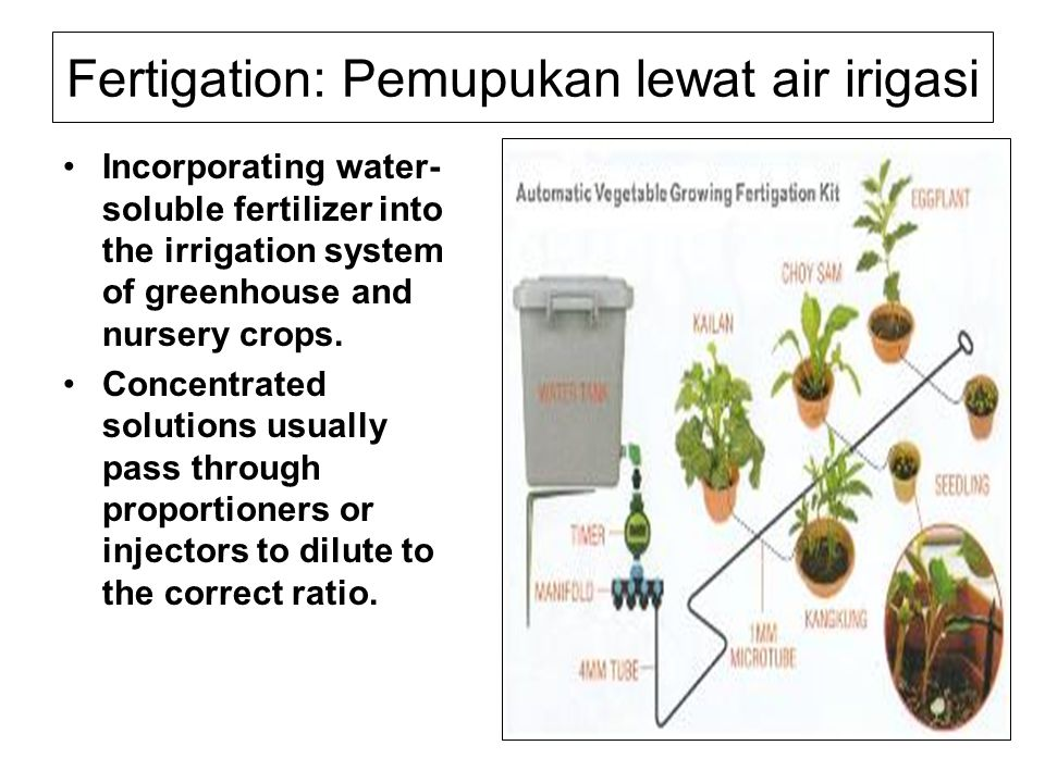 Fertigation: Pemupukan lewat air irigasi Incorporating water- soluble fertilizer into the irrigation system of greenhouse and nursery crops.