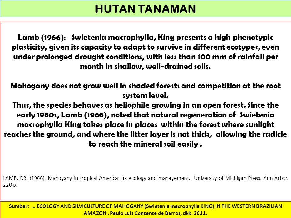 HUTAN TANAMAN Lamb (1966): Swietenia macrophylla, King presents a high phenotypic plasticity, given its capacity to adapt to survive in different ecot