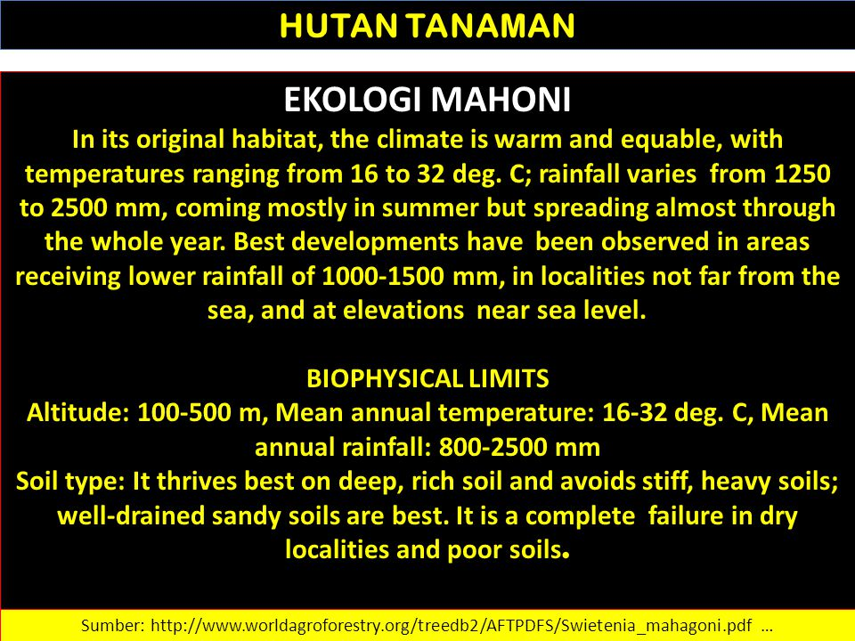 HUTAN TANAMAN EKOLOGI MAHONI In its original habitat, the climate is warm and equable, with temperatures ranging from 16 to 32 deg. C; rainfall varies