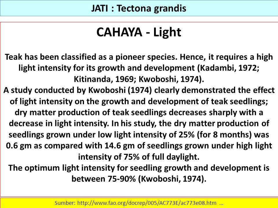 JATI : Tectona grandis CAHAYA - Light Teak has been classified as a pioneer species. Hence, it requires a high light intensity for its growth and deve