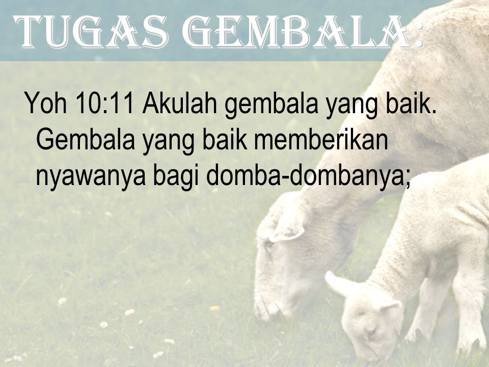 Tugas GEMBALA: Yoh 10:11 Akulah gembala yang baik.