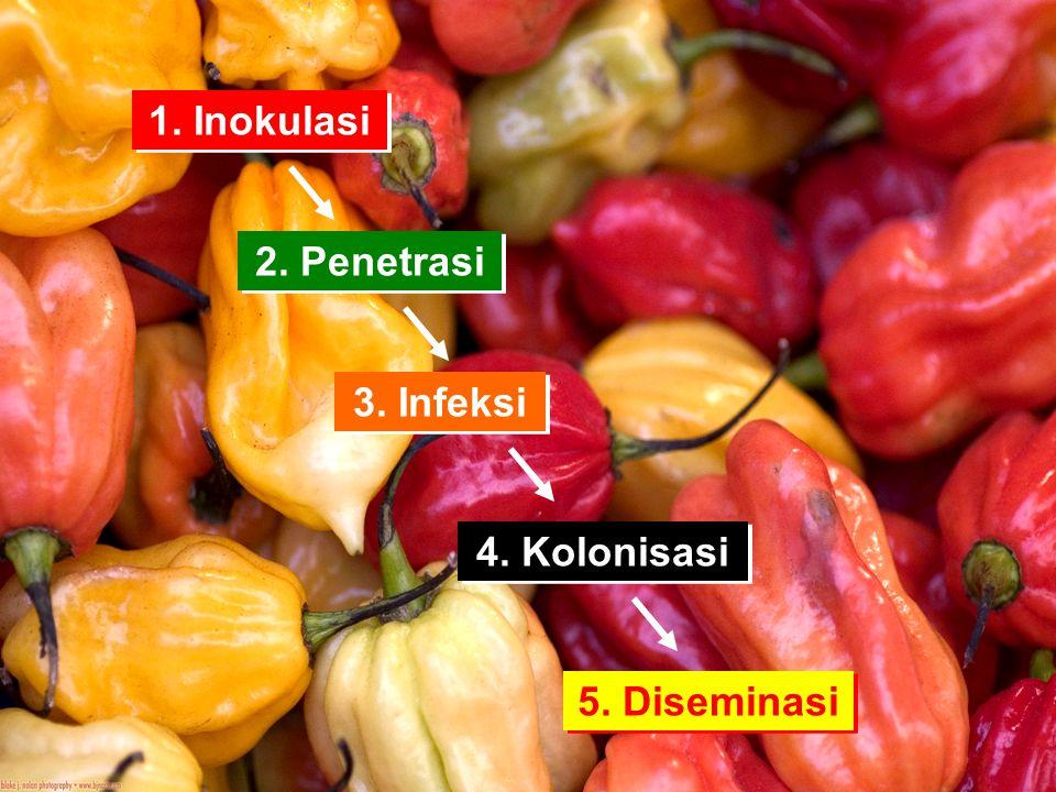 a.Penetrasi Bakteri patogenik umumnya masuk via stomata yang terbuka.