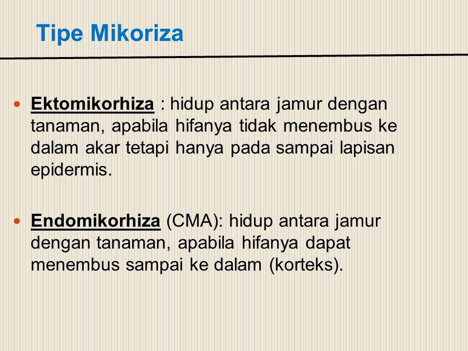 Tipe Mikoriza Ektomikorhiza : hidup antara jamur dengan tanaman, apabila hifanya tidak menembus ke dalam akar tetapi hanya pada sampai lapisan epiderm