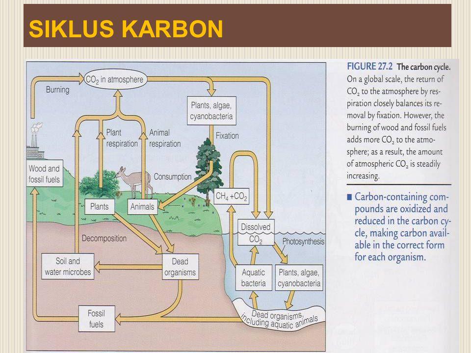 Interaksi yang menguntungkan Antara lain : - Cendawan Mikoriza dengan akar tanaman - Bakteri Rhizobium dengan akar tanaman leguminosae