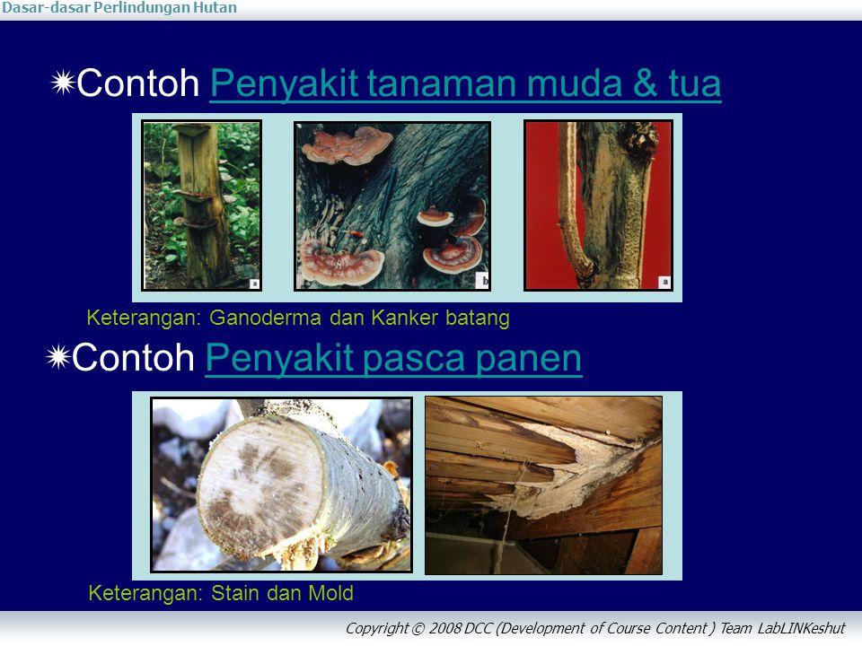 Dasar-dasar Perlindungan Hutan Copyright © 2008 DCC (Development of Course Content ) Team LabLINKeshut  Contoh Penyakit tanaman muda & tuaPenyakit ta