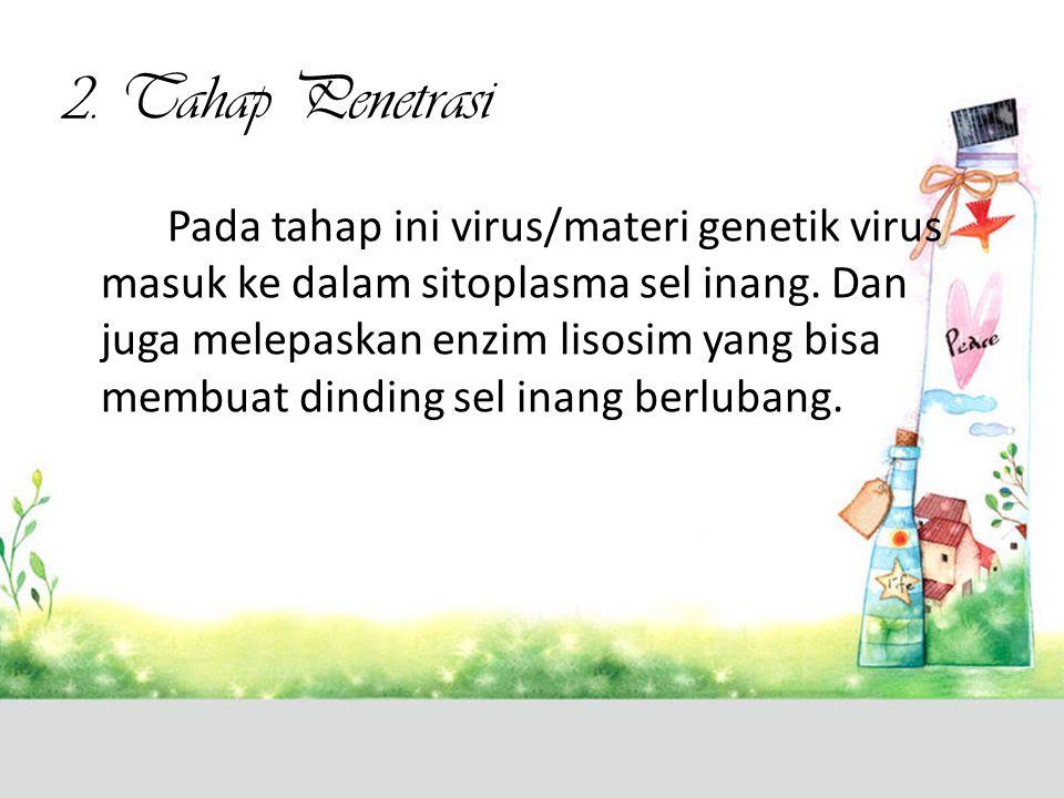 2. Tahap Penetrasi Pada tahap ini virus/materi genetik virus masuk ke dalam sitoplasma sel inang. Dan juga melepaskan enzim lisosim yang bisa membuat