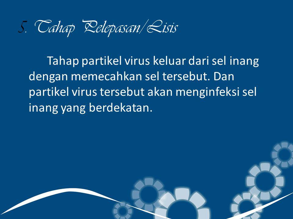 5. Tahap Pelepasan/Lisis Tahap partikel virus keluar dari sel inang dengan memecahkan sel tersebut. Dan partikel virus tersebut akan menginfeksi sel i