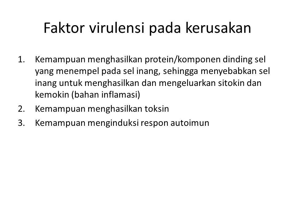 Faktor virulensi pada kerusakan 1.Kemampuan menghasilkan protein/komponen dinding sel yang menempel pada sel inang, sehingga menyebabkan sel inang unt