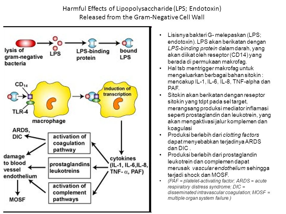 Harmful Effects of Lipopolysaccharide (LPS; Endotoxin) Released from the Gram-Negative Cell Wall Lisisnya bakteri G- melepaskan (LPS; endotoxin). LPS