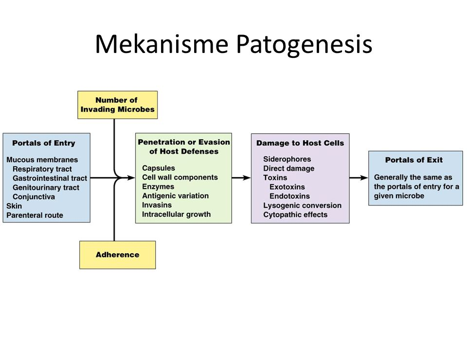 Faktor virulensi pada kerusakan toksin, protease, autoimun