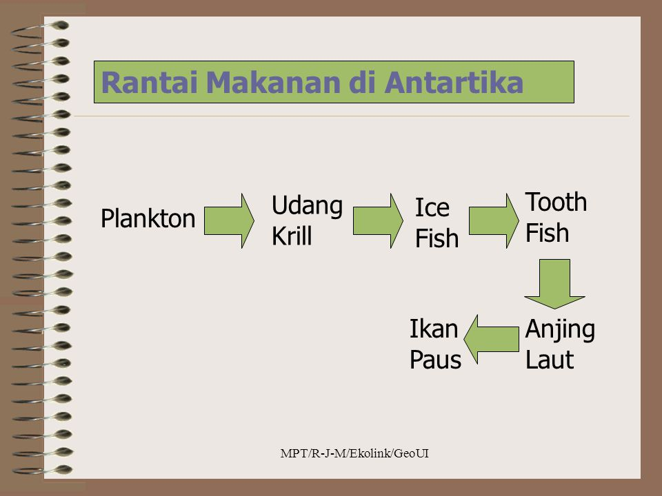 MPT/R-J-M/Ekolink/GeoUI Rantai Makanan di Antartika Plankton Udang Krill Ice Fish Tooth Fish Anjing Laut Ikan Paus