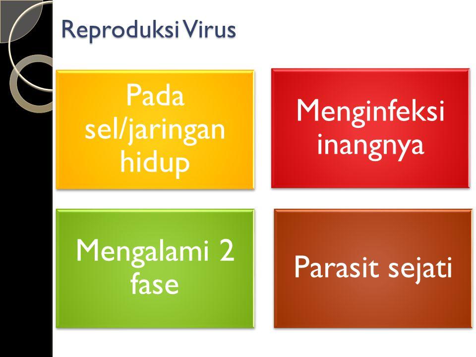 Pada sel/jaringan hidup Menginfeksi inangnya Mengalami 2 fase Parasit sejati Reproduksi Virus