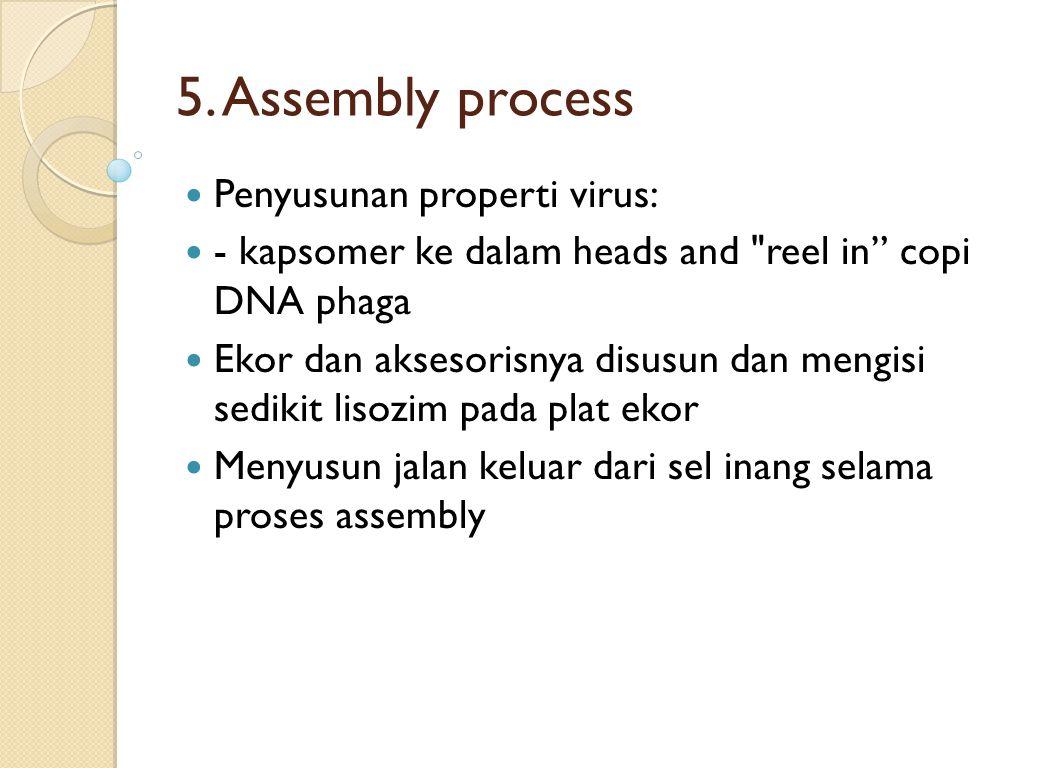 5. Assembly process Penyusunan properti virus: - kapsomer ke dalam heads and