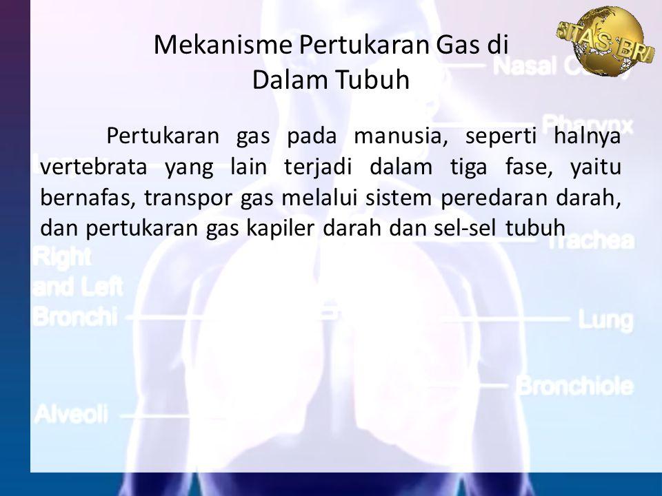 Pertukaran gas pada manusia, seperti halnya vertebrata yang lain terjadi dalam tiga fase, yaitu bernafas, transpor gas melalui sistem peredaran darah,