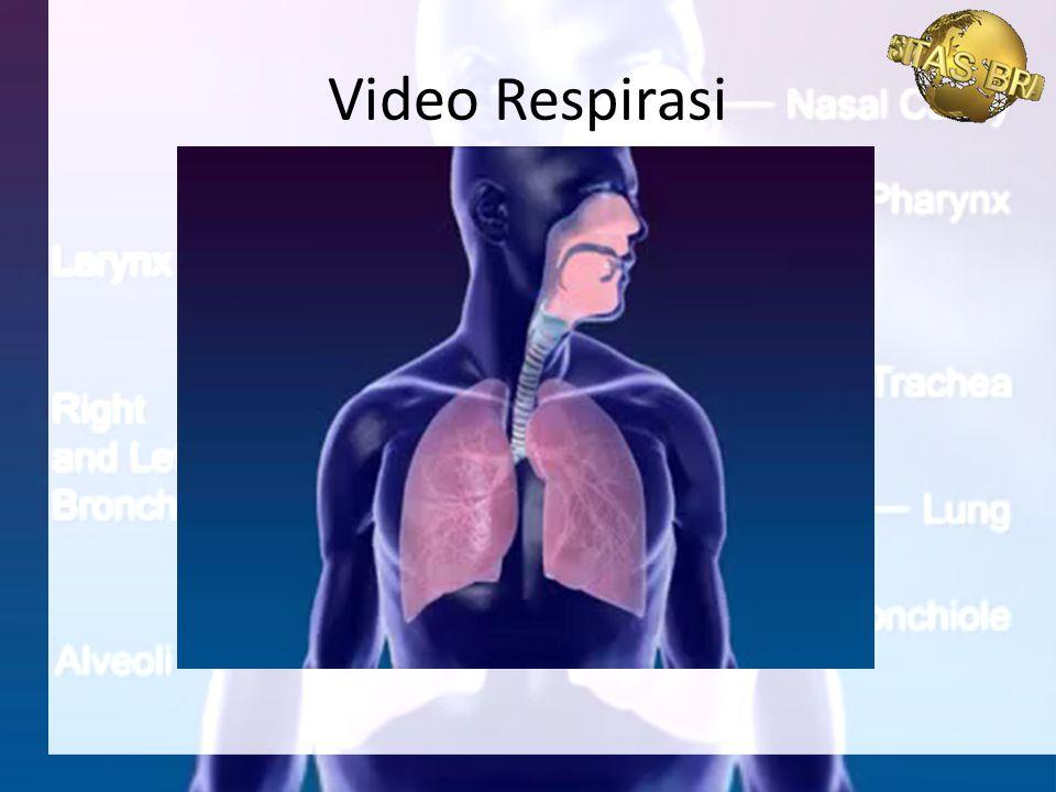 Video Respirasi