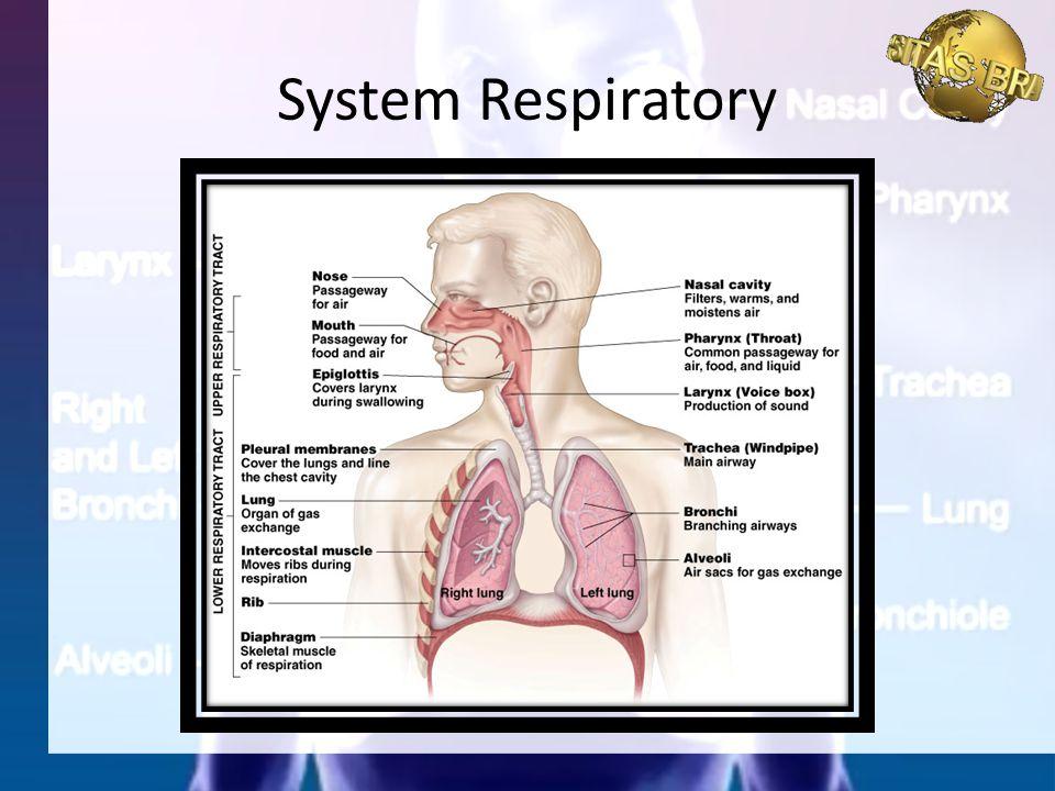 Terjadi pertukaran gas di dalam jaringan tubuh.