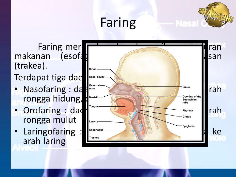 Faring merupakan daerah persilangan saluran makanan (esofagus) dan saluran pernapasan (trakea). Terdapat tiga daerah bagian : Nasofaring : daerah fari