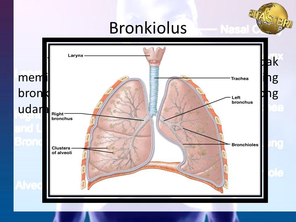 Tidak seperti bronkus, bronkiolus tidak memiliki cincin tulang rawan. Masing-masing bronkiolus berakhir pada sekelompok kantong udara yang disebut alv
