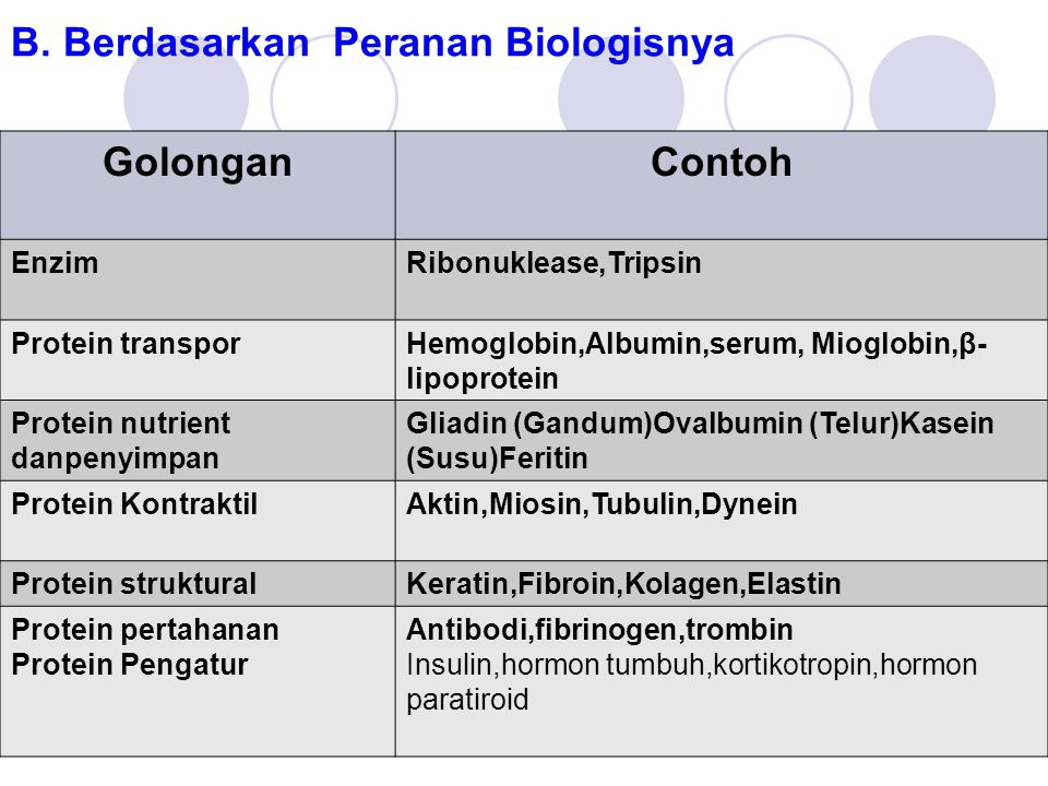 B. Berdasarkan Peranan Biologisnya GolonganContoh EnzimRibonuklease,Tripsin Protein transporHemoglobin,Albumin,serum, Mioglobin,β- lipoprotein Protein
