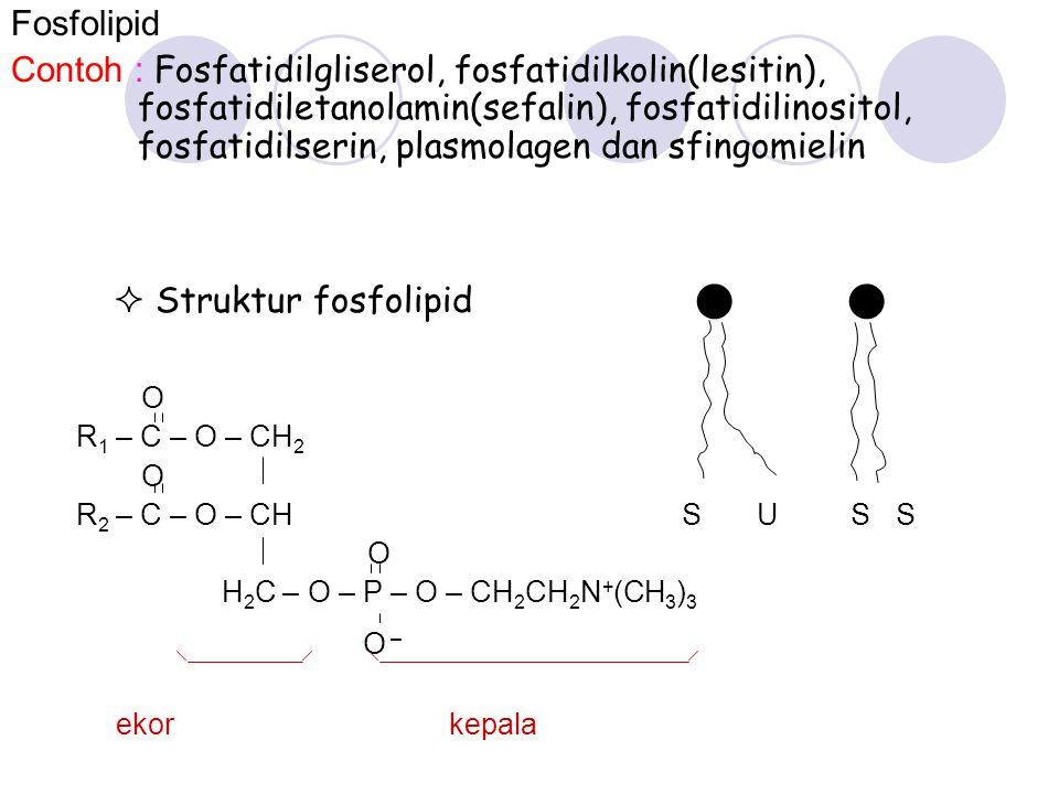 Fosfolipid Contoh : Fosfatidilgliserol, fosfatidilkolin(lesitin), fosfatidiletanolamin(sefalin), fosfatidilinositol, fosfatidilserin, plasmolagen dan