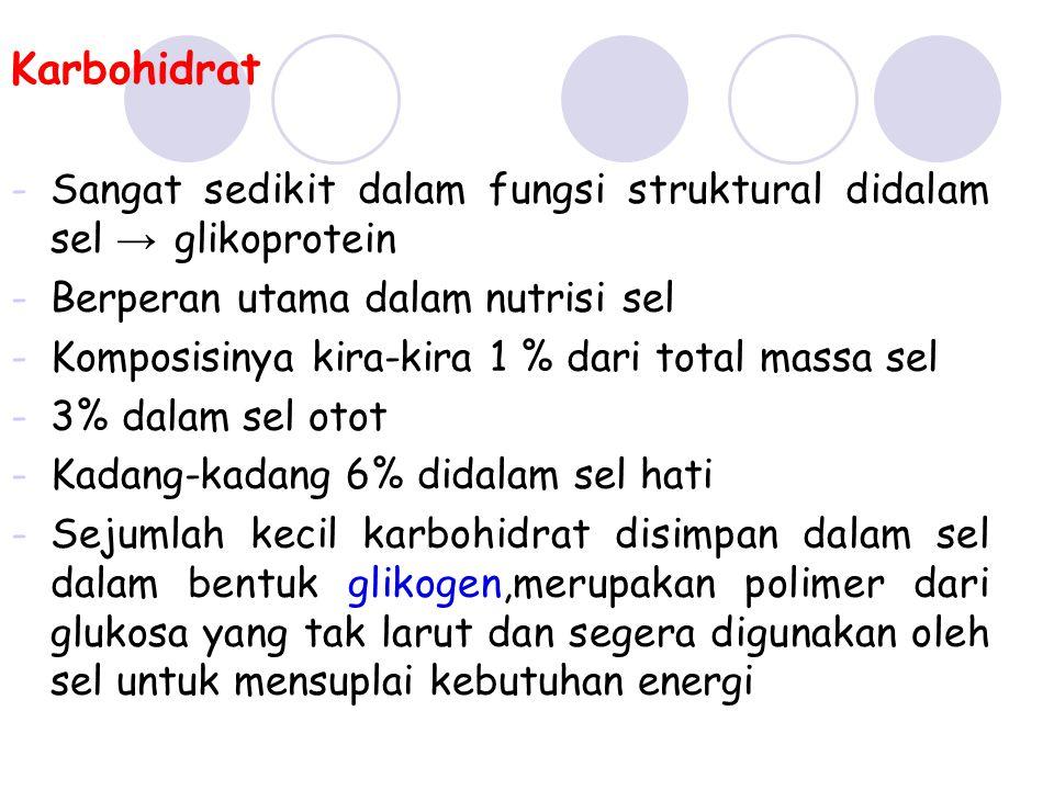 Karbohidrat -Sangat sedikit dalam fungsi struktural didalam sel → glikoprotein -Berperan utama dalam nutrisi sel -Komposisinya kira-kira 1 % dari tota