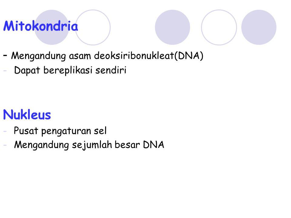 Mitokondria - Mengandung asam deoksiribonukleat(DNA) -Dapat bereplikasi sendiri Nukleus -Pusat pengaturan sel -Mengandung sejumlah besar DNA